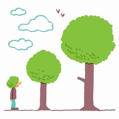 Trees Calm Down Study Tree Healthy Ten