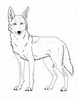 Coyote Pages Coloring Printable Lineart Cartoon Paint Friendly Drawing Drawings Face Coyotes Wile Canis Ferox Version Jackal Howling Wolf Head sketch template