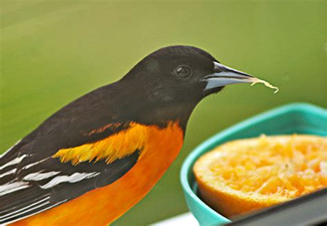 creative ideas for feeding birds