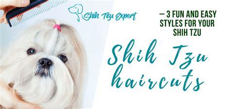 3 Most Stunning Shih Tzu Haircuts 1.puppy Cut 2.teddy Bear