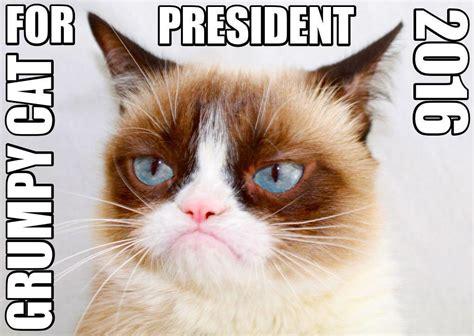 grumpy cat  president  grumpy cat   meme