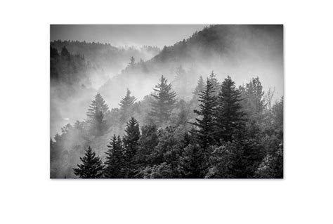 buy misty pine forest canvas wall art print