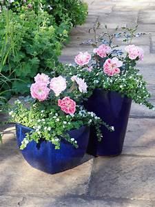 Rosen Im Topf überwintern : topfrosen pflanzen und pflegen diese rosen kann man im k bel halten ~ Orissabook.com Haus und Dekorationen
