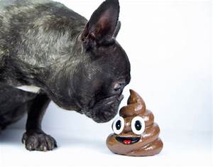 why dog eats poop new study