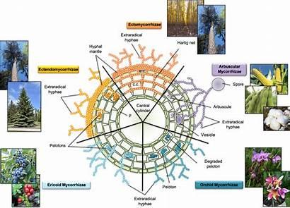 Soil Crop Sciences Fungi Nc Types State