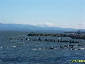 Panoramio - Photo of Estuary of Columbia River