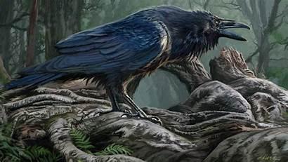 Raven Desktop Backgrounds Bird Wallpapers Computer Animal