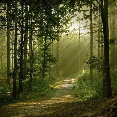 tree plantation protect  grow  money