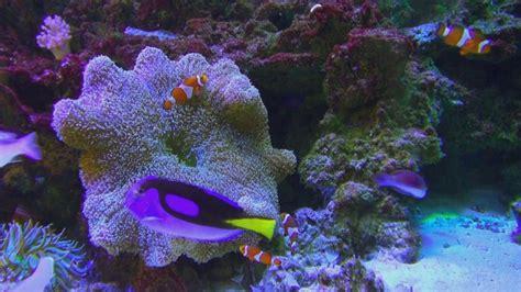 coral poison aquarium gma