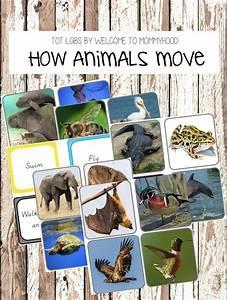 813 best Montessori on TpT images on Pinterest ...