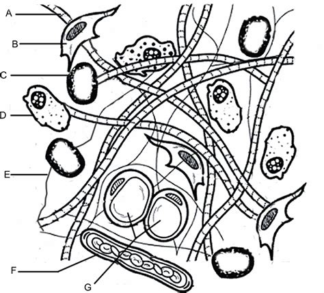 coloring pages tissue