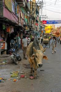 Holy Cow India Street