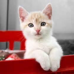 pet cat cat insurance plans pet cat health insurance