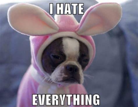 Sad Animal Memes - easter