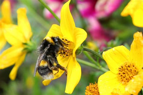 attracting bees to your garden 10 helpful tips a list