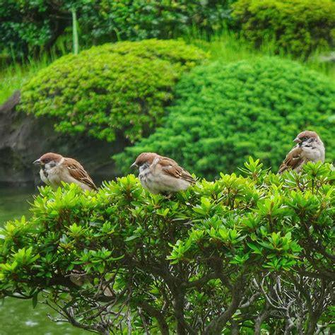 Japanischer Garten Kosten by Garten Renovieren Kosten Affordable Erstaunlich Kleines