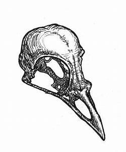 Bird skull | Sketch ideas | Pinterest | Bird skull, Bird ...