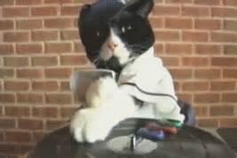 cat dj enjoy the masti