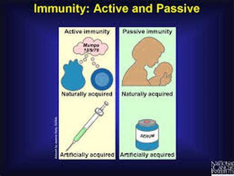 passive  acquired immunity  immune system