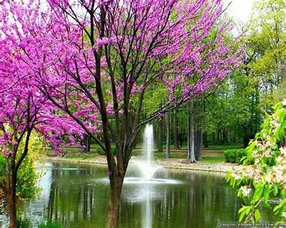 Spring Wallpapers Desktop Season Background Scenery Nature