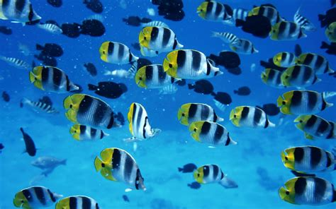 small sea wallpaper backgrounds l desktop wallpapers l download wallpaper sea fish