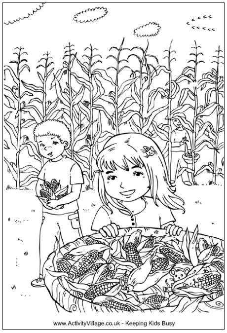 picking corn coloring page children   corn field
