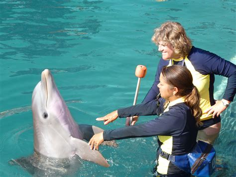 Students Find Careers And Happiness As Dolphin Trainers