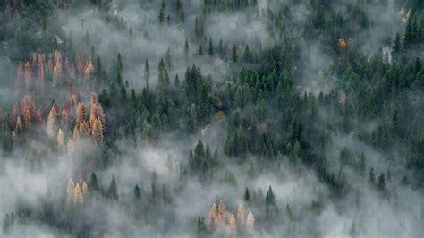 foggy yosemite ultra hd  wallpaper uhd papers