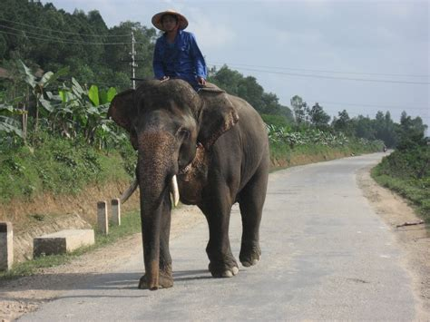 elephant tub india 11 awesome animals you must see in