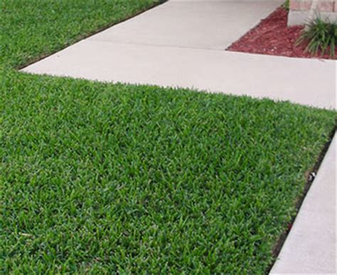 mow lawn edging phillip island mowing and garden services