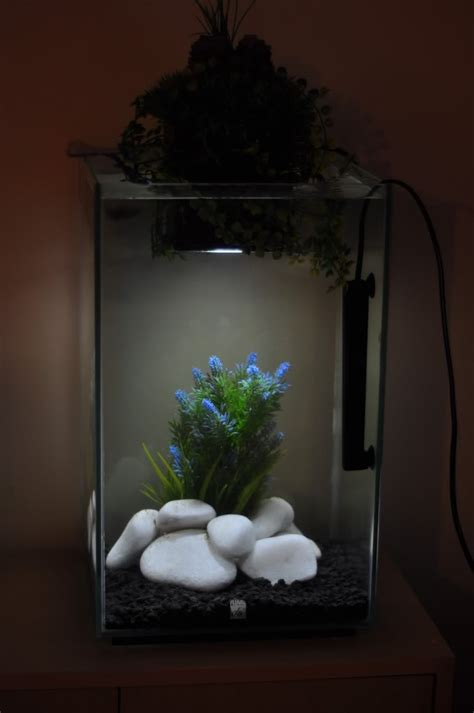 Fluval Chi Aquascape - 17 best images about fluval chi on live