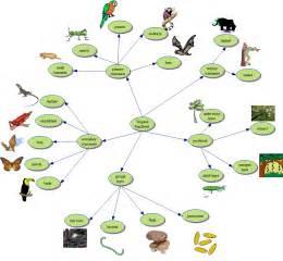 web cuisine rainforest food web calendar template site