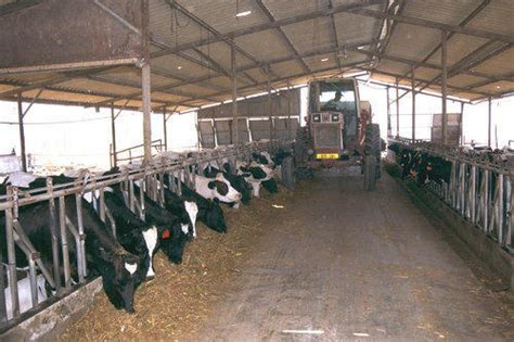 Dairy Cow Shed Design - dairy farm shed cow farm shed cattle farm shed ग श ल