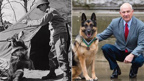 Chips, a U.S. Army Hero Dog That Served in World War II ...