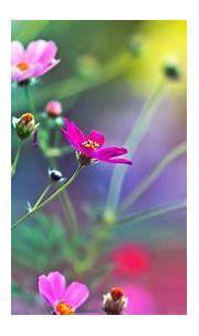 Spring Flower Wallpaper HD 3D - WallpaperSafari