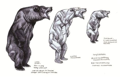 images  bear reference  pinterest