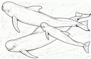 Humpback Whale Coloring Pages Coloring Home