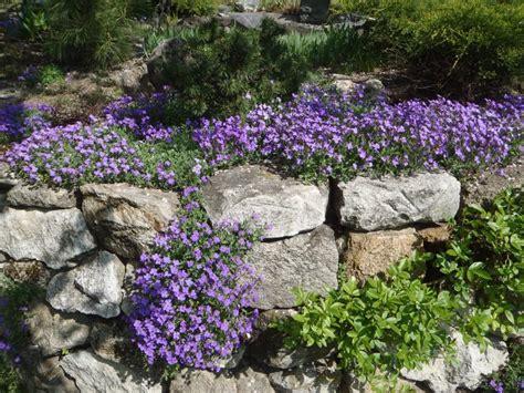Bodendecker, Blüte März-mai