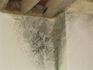 moisissure dans la maison bande transporteuse caoutchouc With probl me de moisissure dans une chambre