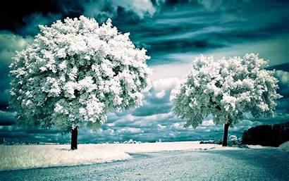 Winter Nature Seasons Wallpapers Desktop Background Pretty