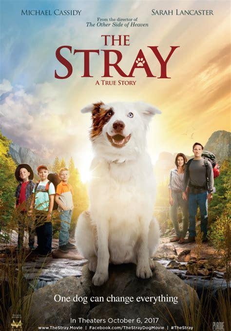 stray  tells  heartwarming story
