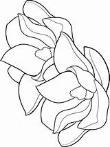 Magnolia Coloring Flower Flowers Printable Recommended Colors sketch template