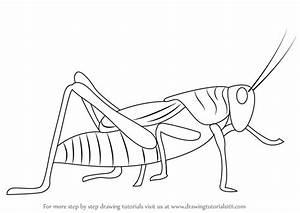 How To Draw Grasshopper Wings | www.pixshark.com - Images ...