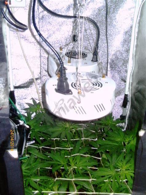 mini chambre de culture cultiver du cannabis en espaces réduits du growshop