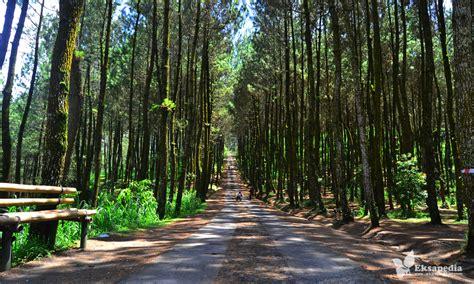 udah main  hutan pinus kragilan  magelang swaragama