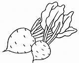Beet Coloring sketch template