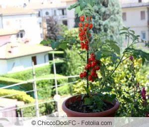 Gemüse Auf Dem Balkon : gem se auf dem balkon anbauen gem seanbau in balkonk sten ~ Lizthompson.info Haus und Dekorationen