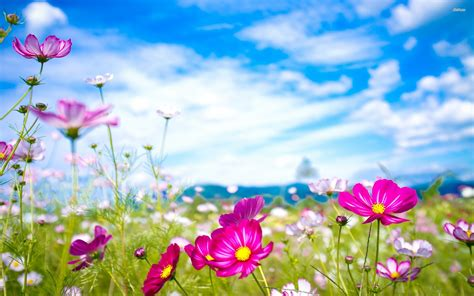 Free Summer Flowers Wallpaper  Hd Wallpapers
