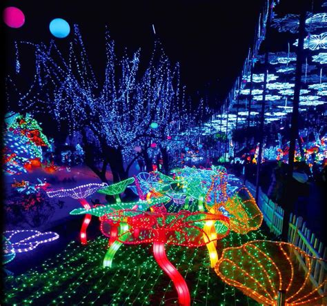festival of lights florida this florida festival with millions of lights is out of