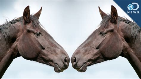horse polo cloned